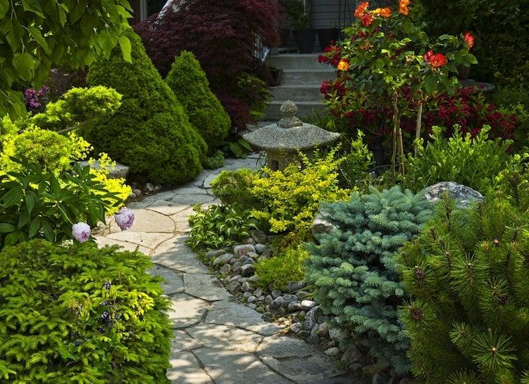 evergreens - maintenance landscaping