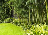 Backyard Privacy: 10 Best Plants to Grow - Bob Vila