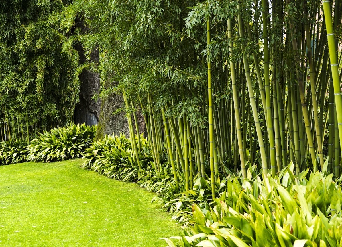 backyard privacy 10 plants