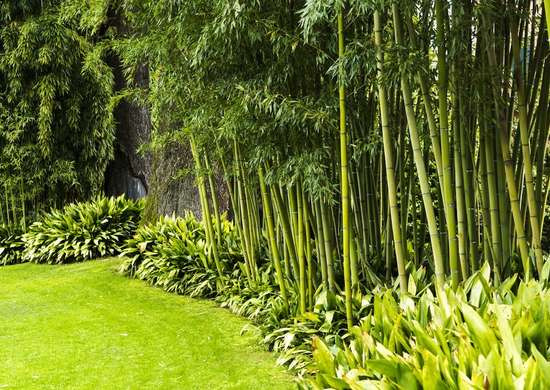 bamboo landscaping - backyard privacy