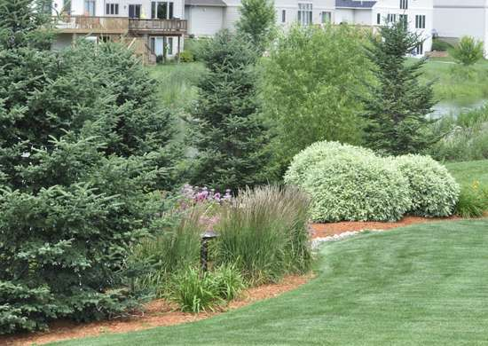 trouble-free trees - maintenance