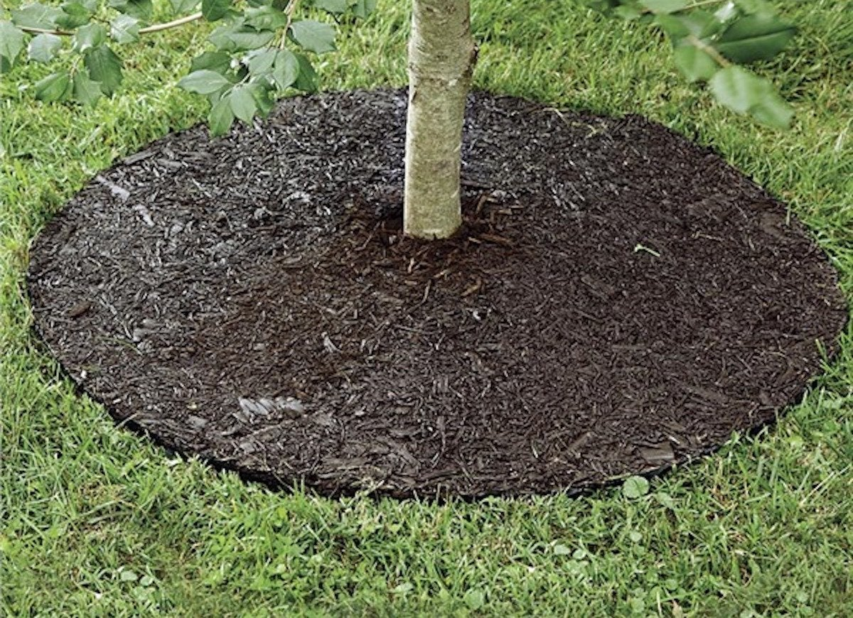 Permanent Mulch Tree Ring - Curb Appeal Ideas Under