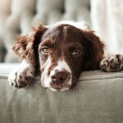 Best Sofa Material For Cat Owners Transitional Leather How To Get Rid Of Pet Hair Bob Vila