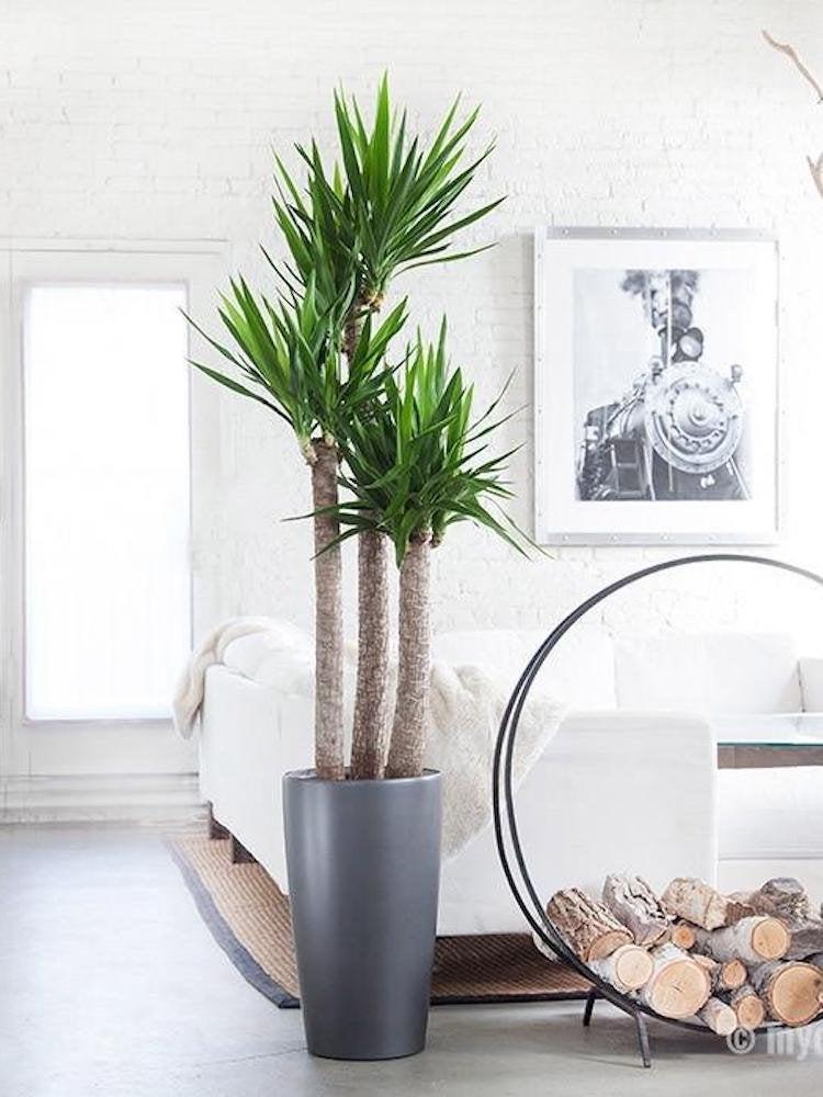 Large Indoor Plants Vases