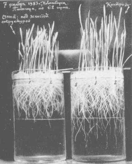 O campo CSE afetava o crescimento de plantas