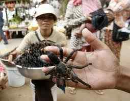 Um vendedor de aranhas fritos posa com uma aranha enquanto espera clientes na estação de ônibus em Skun, província de Kampong Cham, no leste de Phnom Penh. Ele cobra 4 reais por 10 aranhas fritas, que vêm temperados com alho. Os aracnídeos do tamanho de uma mão fechada são crocantes por fora e tem gosto de frango gosmento no interior.(Xinhua / Reuters)