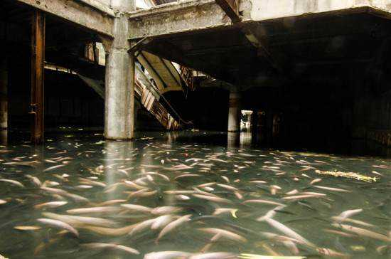 mall-full-of-fish-550x364