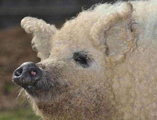 cute-fluffy-animals-19