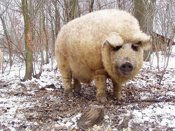 cute-fluffy-animals-303
