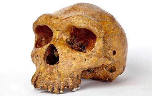 broken-hill-skull-banner-nocurve_112760_1