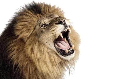 lions-roar1