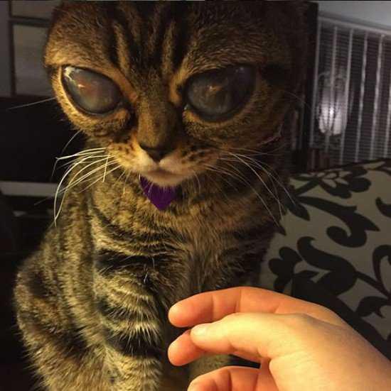 Matilda-alien-eyes7-550x551