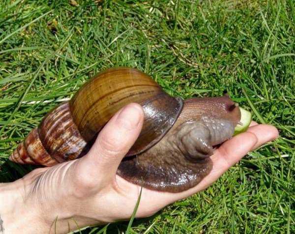 giant_snails_13-600x476
