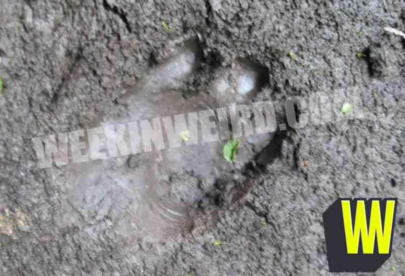 firstkygoblinfootprint