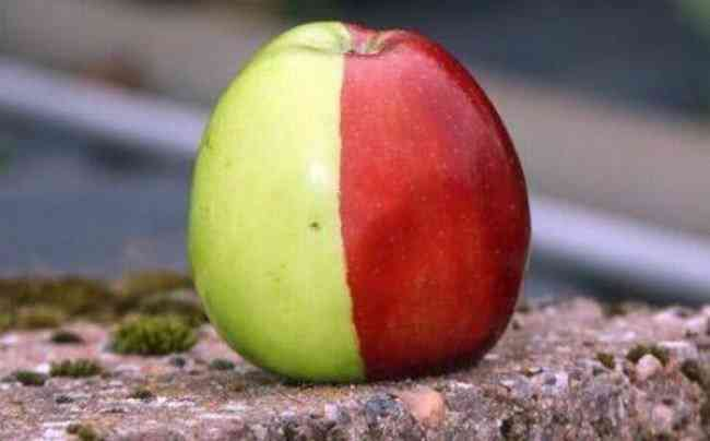 Unusual-Apples-8-650x404