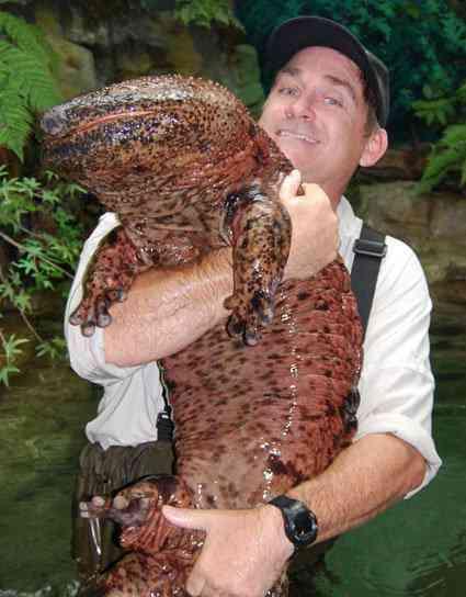 giant-salamander
