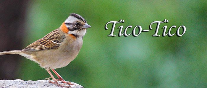 A lição dos Ticos-Ticos