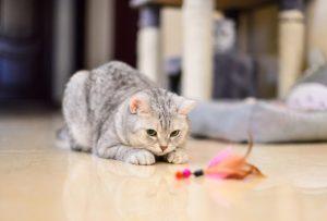 Como fazer brinquedos para cães e gatos por Dr. Renato Zanetti