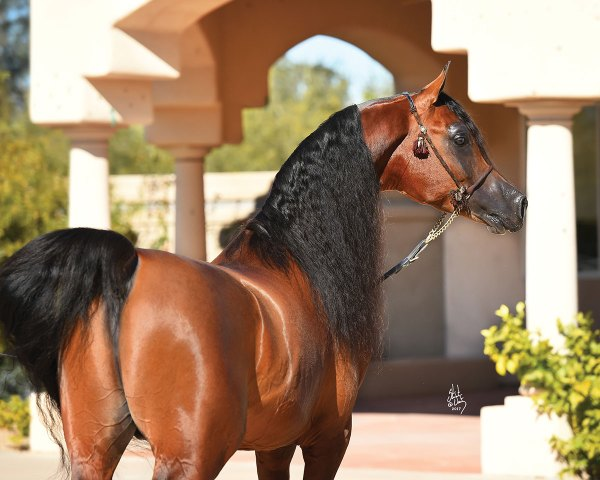 Esperanza Arabians — Four Decades of Devotion to the Breed