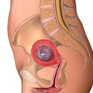 Baby Development In Womb: Fetal Development week by week 4