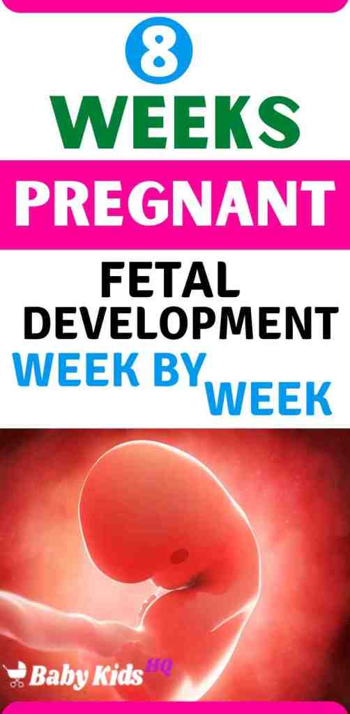 Baby Development in womb 8 Weeks Pregnant - Symptoms, Baby Bump, Tips, and Development
