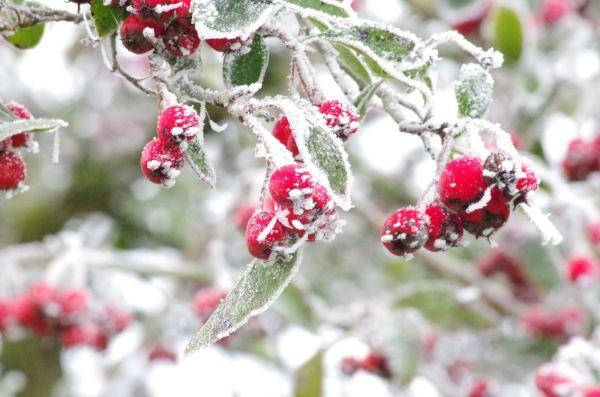 brighten winter landscape