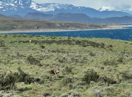 Tierra Patagonia wildlife view