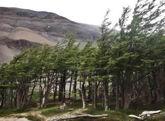 Torres del Paine lenge trees