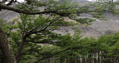Torres del Paine National Park Lenga trees detail