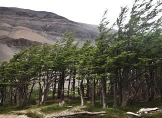 Torres del Paine National Park Lenga trees