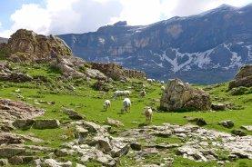 Cirque de Troumouse Sheep Posse
