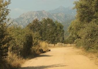 Domaine de Murtoli roads