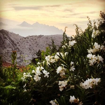 Les Jardins de Loubly flowers