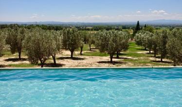 Hotel Mas Lazuli pool olive trees