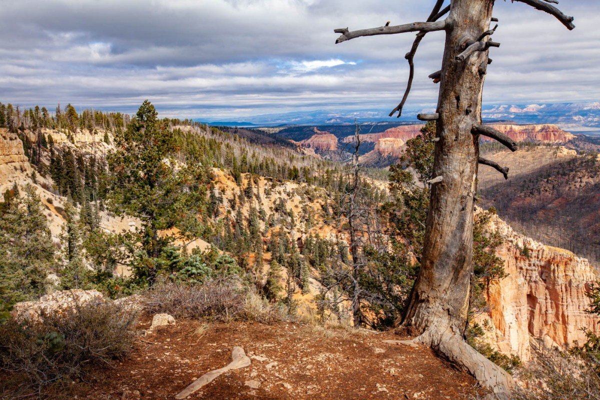 18-Mile Scenic Drive Piracy Point Overlook at Bryce Canyon National Park #vezzaniphotography