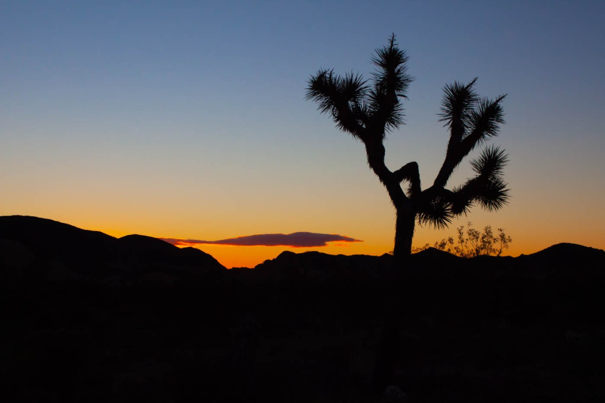How the Federal Government Shutdown Affected Joshua Tree National Park #vezzaniphotography must-see location at Joshua Tree