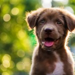 140 Perfect Names For Brown Dogs Cuteness