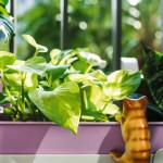 What Type Of Container Should You Use For A Pothos Plant