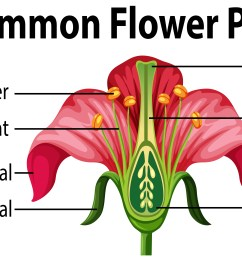 identify and label diagram of flower [ 6668 x 3300 Pixel ]