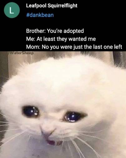 """Destruction 100 Template : destruction, template, Destruction, Template, Submitted, Under:""""Crying, Cat"""", MemeCreatorApp.com"""
