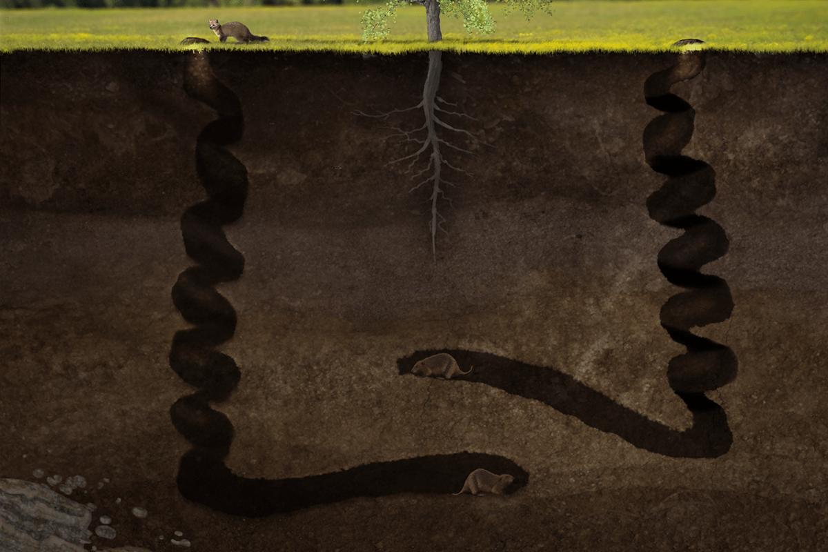 Resultado de imagem para Palaeocastor