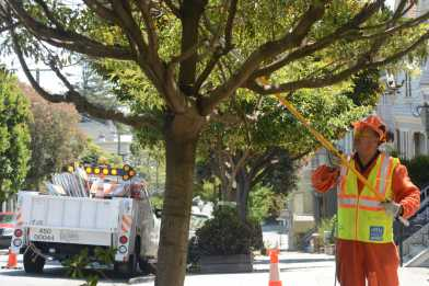 A San Francisco Public Works crew member clips small branches of a tree at a tree maintenance program launch in Noe Valley in San Francisco, Calif. on Wednesday, July 19, 2017.