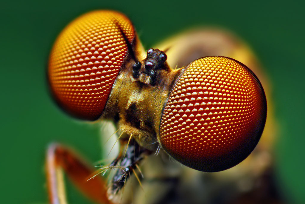 Image result for fly eyes