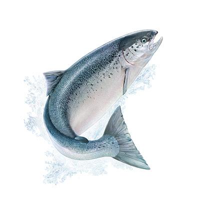 Salmon oil plus