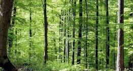 Aprueban la Ley de Desarrollo Forestal para Guanajuato