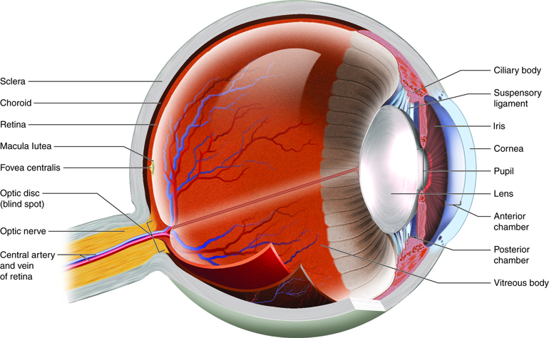 Special Senses: Vision | Anatomy and Physiology I