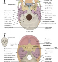 this image shows the superior and inferior view of the skull base in the top [ 1100 x 1491 Pixel ]