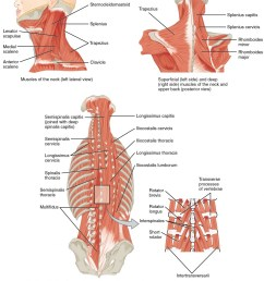 the top left panel shows a lateral view of the muscles of the neck and [ 1040 x 1208 Pixel ]