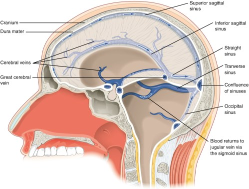 small resolution of this diagram shows a lateral view of the brain and labels the location of the different