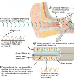 this diagram shows how sound waves travel through the ear and each step details the [ 1040 x 773 Pixel ]
